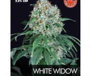 1 UND FEM - WHITE WIDOW