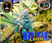 10 UND FEM - BLUE CHEESE