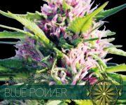 10 UND FEM - BLUE POWER