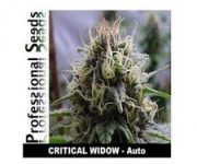 10 UND FEM - CRITICAL WIDOW AUTO