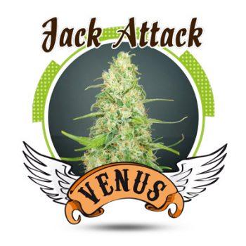 10 UND FEM - JACK ATTACK