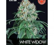 10 UND FEM- WHITE WIDOW
