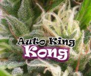 2 UND FEM - AUTO KING KONG