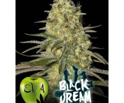 3 UND FEM - BLACK DREAM