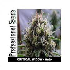 3 UND FEM - CRITICAL WIDOW AUTO