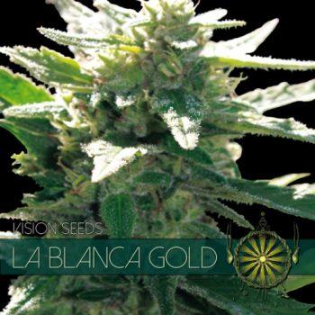 3 UND FEM - LA BLANCA GOLD