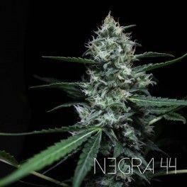 3 UND FEM - NEGRA 44
