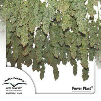 3 UND FEM - POWER PLANT