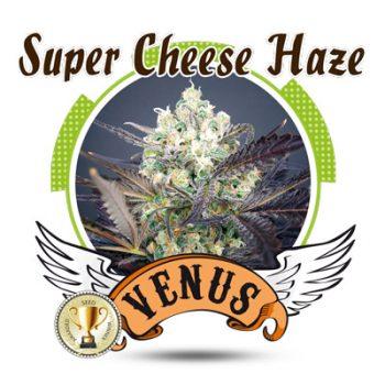 3 UND FEM - SUPER CHEESE HAZE