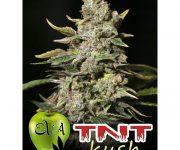 3 UND FEM - TNT KUSH