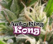 4 UND FEM - AUTO KING KONG