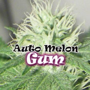 4 UND FEM - AUTO MELON GUM