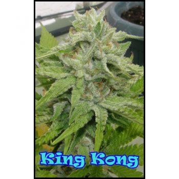 4 UND FEM - KING KONG