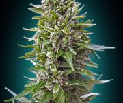 5 UND FEM - AUTO NORTHERN LIGHTS.AUTO