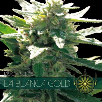 5 UND FEM - LA BLANCA GOLD
