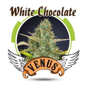 5 UND FEM - WHITE CHOCOLATE