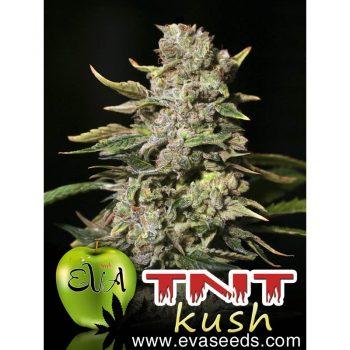 6 UND FEM - TNT KUSH