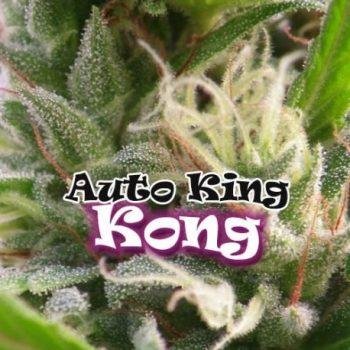 8 UND FEM - AUTO KING KONG