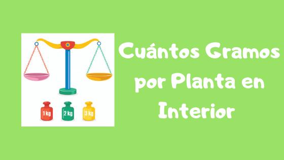 cuántos gramos por planta en interior
